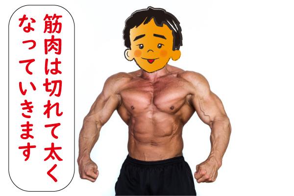 筋肉が太くなる