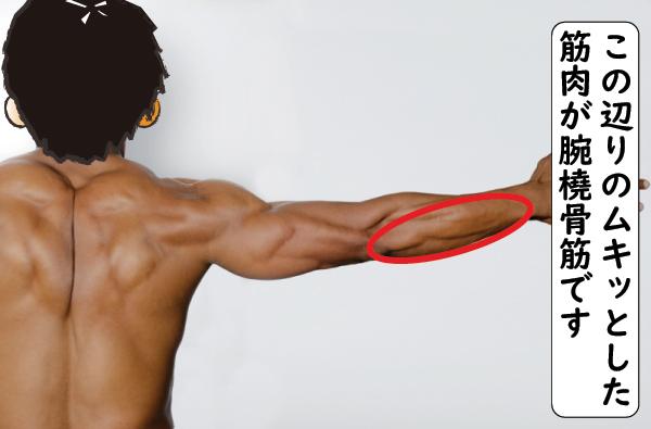 腕橈骨筋の場所
