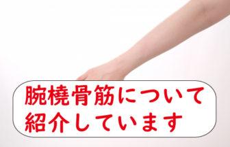腕橈骨筋について