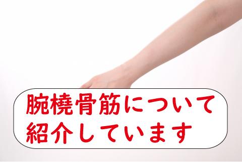 腕橈骨筋(わんとうこつきん)の筋トレと筋肉を画像で紹介!