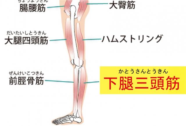 下腿三頭筋画像