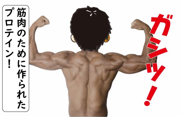 筋肉のためのプロテイン